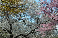Garden At The Brooklyn Botanic Gardens On A Sunny Spring Day, New York  Royalty Free
