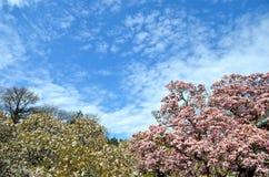 Garden at the Brooklyn Botanic Gardens on a sunny Spring day, New York. USA Stock Photo