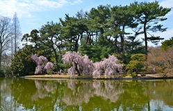 Garden at the Brooklyn Botanic Gardens on a sunny Spring day. Royalty Free Stock Photography