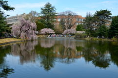 Garden at the Brooklyn Botanic Gardens on a sunny Spring day. Stock Image