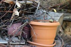 Garden brushwood Stock Photo