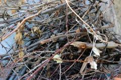 Garden brushwood Stock Image