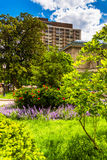 Garden and buildings in Mount Vernon, Baltimore, Maryland. Stock Images