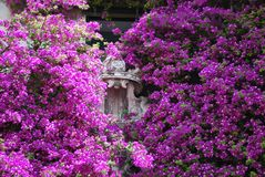 Garden overflowing with Bougainvillea, Capri, Italy royalty free stock image