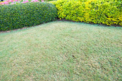 Garden bushes Stock Image