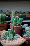 Garden of cactus. Garden with amount variety of cautus Stock Photography