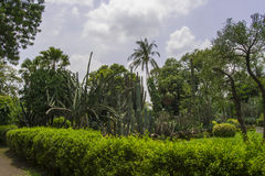 Garden with Cactus and Palm Stock Images