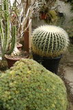 Garden: cactus and succulent plants greenhouse Royalty Free Stock Photo
