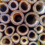 Garden canes Royalty Free Stock Photo