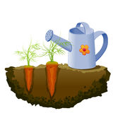 Garden carrot and watering can Stock Photos