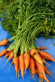 Garden carrots. Pulled from the garden on a blue chair Royalty Free Stock Photography