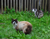 Garden cat Royalty Free Stock Photos