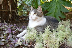 GARDEN CAT. CAT RESTING IN THE PLANTS Stock Photography
