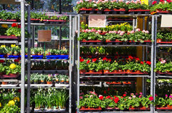 Garden center Royalty Free Stock Images