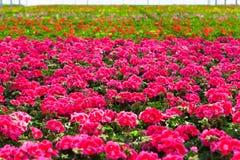 Garden Center Royalty Free Stock Photo