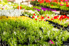 Amazing Garden Center Stock Photos