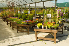 Garden center displays Stock Photography