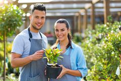 Garden Center Employees Royalty Free Stock Image