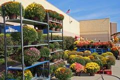 Garden Center exterior com Mums da queda Fotografia de Stock