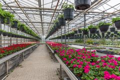 Garden center selling plants in a greenhouse Stock Photo