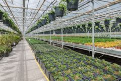 Garden center selling plants in a greenhouse Royalty Free Stock Photography