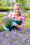 Garden center woman with lavender potted flowers. Smiling garden center woman worker with lavender potted flowers flowerbed royalty free stock photos
