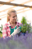 Garden center woman with lavender potted flowers Royalty Free Stock Photography