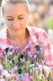 Garden center woman with purple potted plant Royalty Free Stock Photos