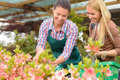 Garden center woman show flowers to customer Stock Photos