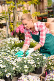 Garden center woman touching potted daisy flowers Stock Images