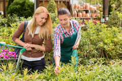 Garden center worker give advice to customer. Women about plant Stock Photo