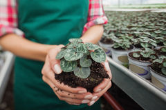 Garden center worker holding plant about to tbe potted Royalty Free Stock Photography