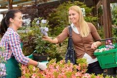 Garden center worker selling potted flower customer Stock Image