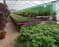 Garden centre. Interior view of garden center Stock Photo