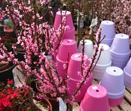Garden centre Royalty Free Stock Images