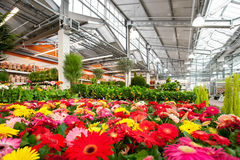 Garden centre. Big garden centre with flowers and tangerine trees Stock Photo