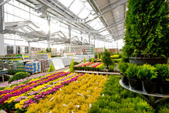 Garden centre. Big garden centre with flowers and cypress trees Stock Images