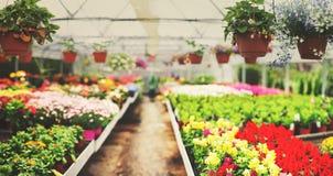 Garden centre Stock Photography