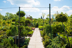 Garden centre, plant nursery Royalty Free Stock Images