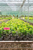 Plant nursery Royalty Free Stock Photography