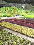Garden centre or plant nursery Stock Image