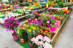 Garden centre. Garden plants for sale in home improvement centre stock images