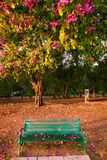 Park Bench under Flowering Tree Royalty Free Stock Image