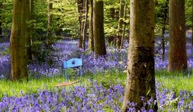 Garden Chair Between Flowers Stock Photos