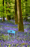 Garden chair in flowers. A blue garden chair in blue flowers in the forest netween trees Stock Images