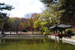 Garden of Changdeokgung Palace. Autumn season in south korea, most leaf and plant started to fall and withers. This place situated in Garden of Changdeokgung stock image