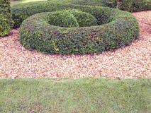 Garden in Chatuchak public park Royalty Free Stock Image