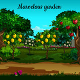 Garden with citrus and green trees in blossom Royalty Free Stock Images