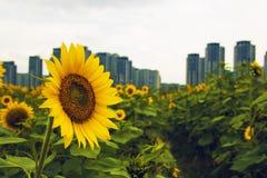 Garden city Stock Images
