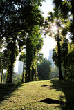 Garden in the city with morning sunlight Royalty Free Stock Photos
